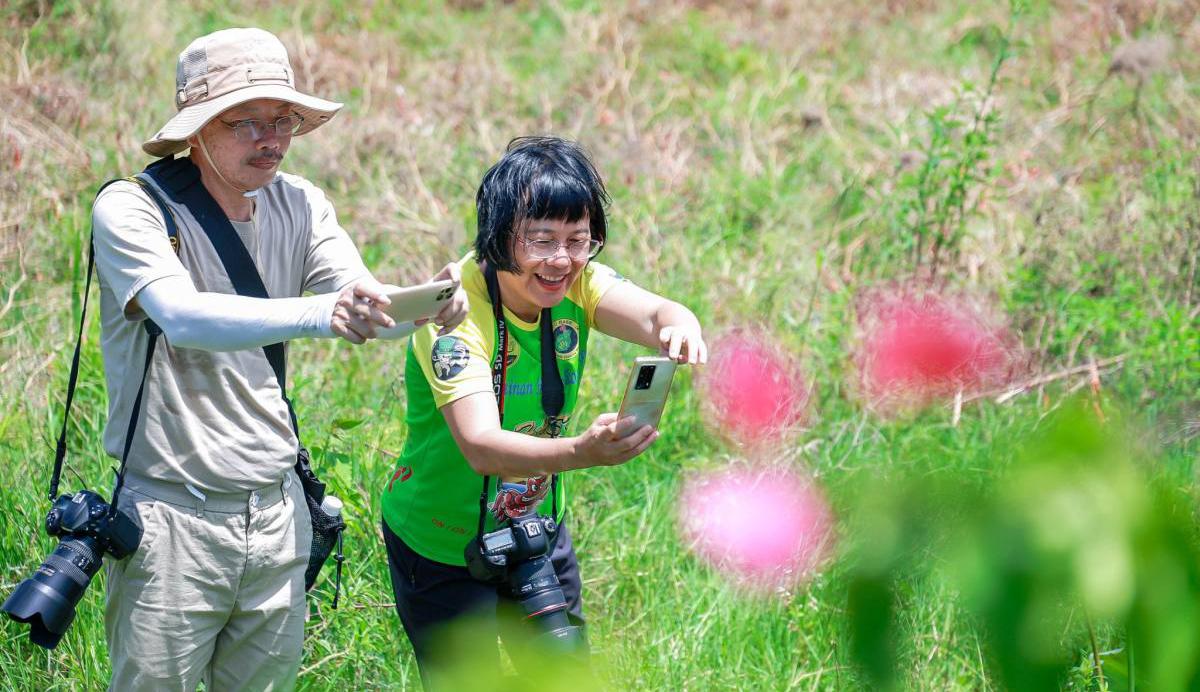 三亚吉阳区摄影大赛采风团打卡红花村 开启田园之旅